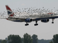 Birds Strike in an Airplane Engine