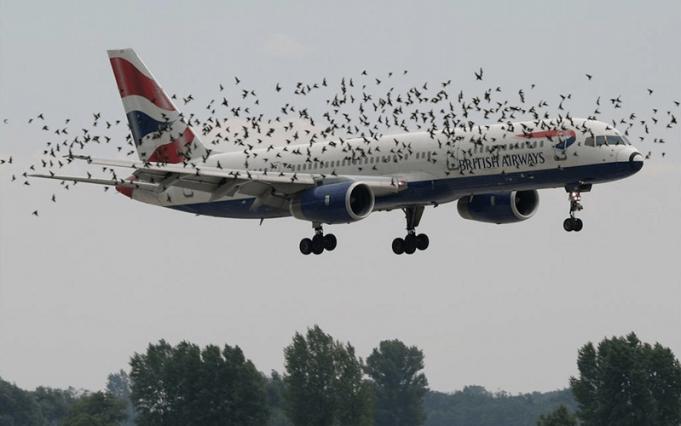 Birds Strike in an Airplane Engine